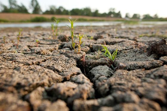 Indiana Drought