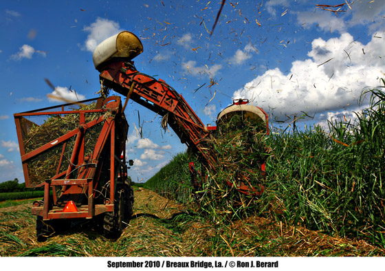 Sugarcane Harvesting