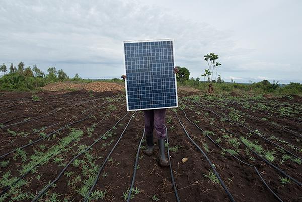 Walking a Sunflower solar irrigation pump solar panel through the rows of drip irrigation at a farm in Kendu Bay, Kenya.