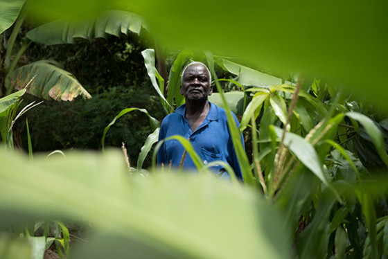 A farmer and his crops, mostly banana trees, in Kendu Bay, Kenya.