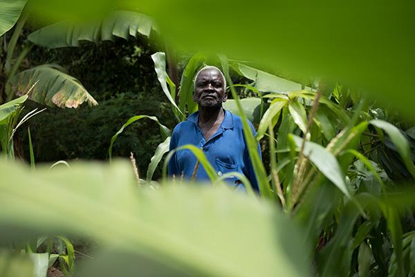 A farmer and his crops, mostly banana trees, in Kendu Bay, Kenya.